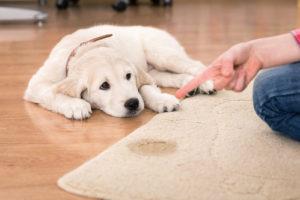 carpet stains, pet stains on carpet
